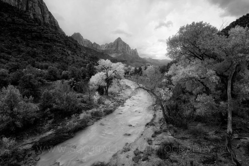 The Watchman in B&W