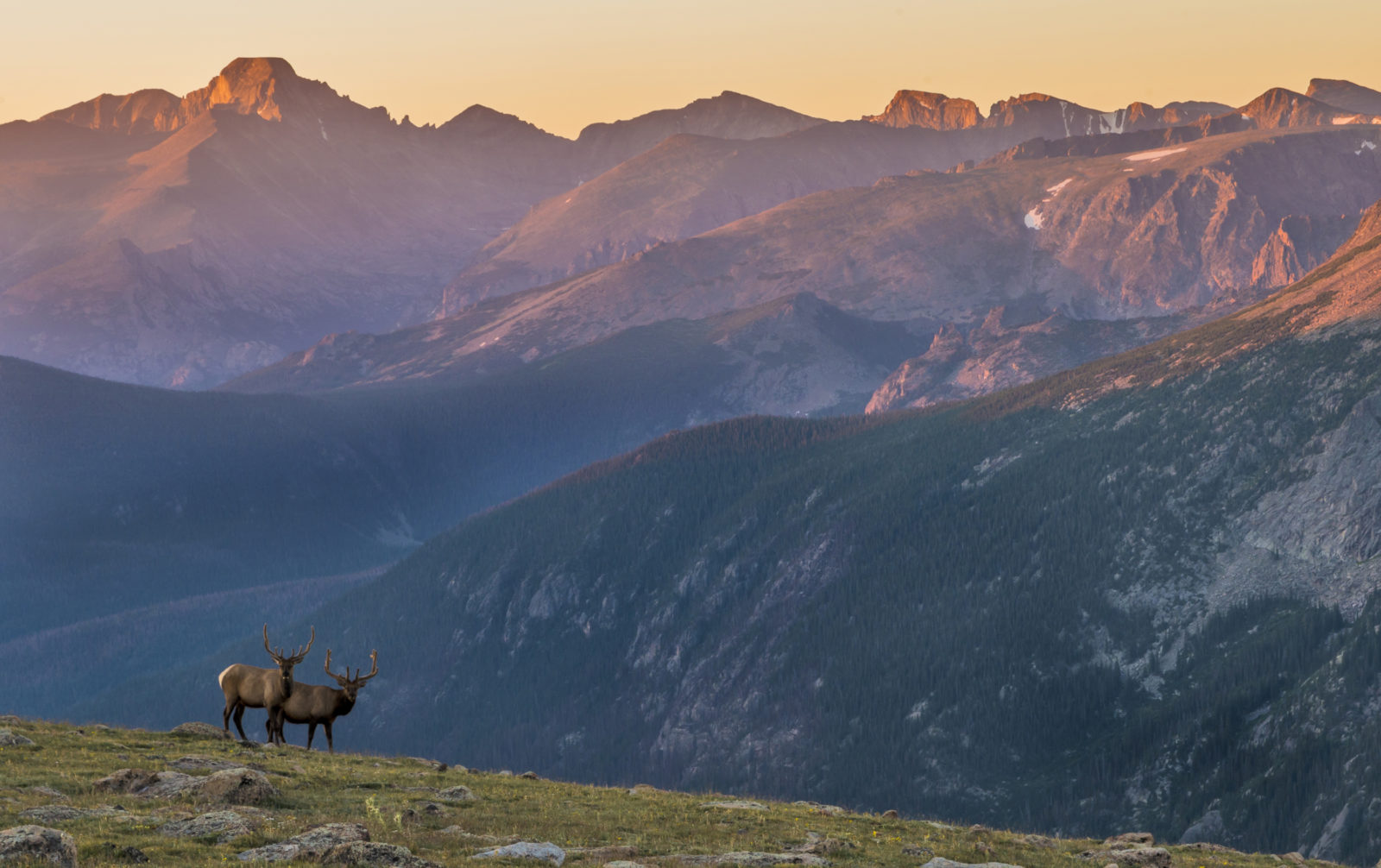 Elk and Longs Peak at Sunrise