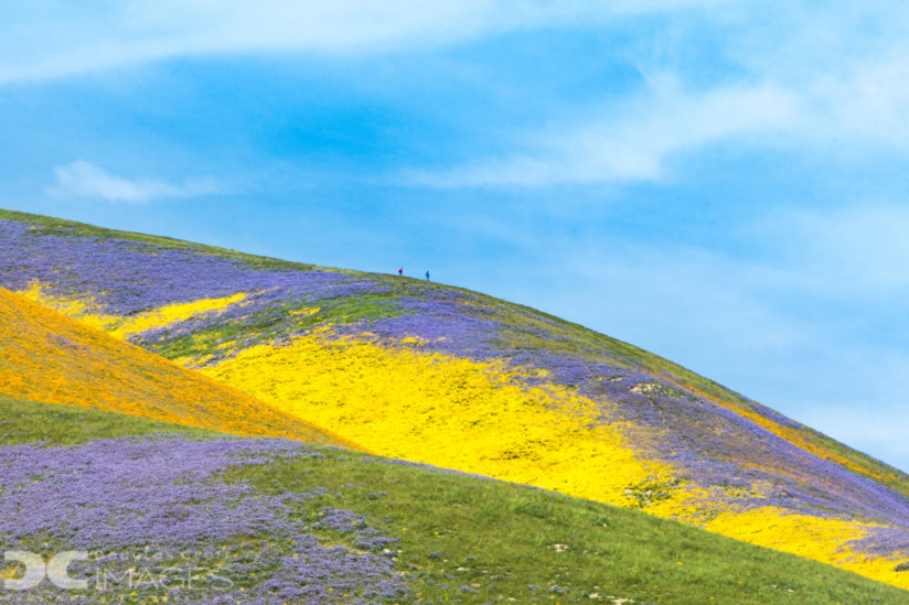 Hiking Through the Super Bloom