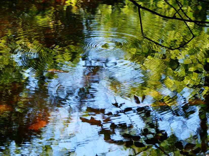 Reflections with Water Ripples