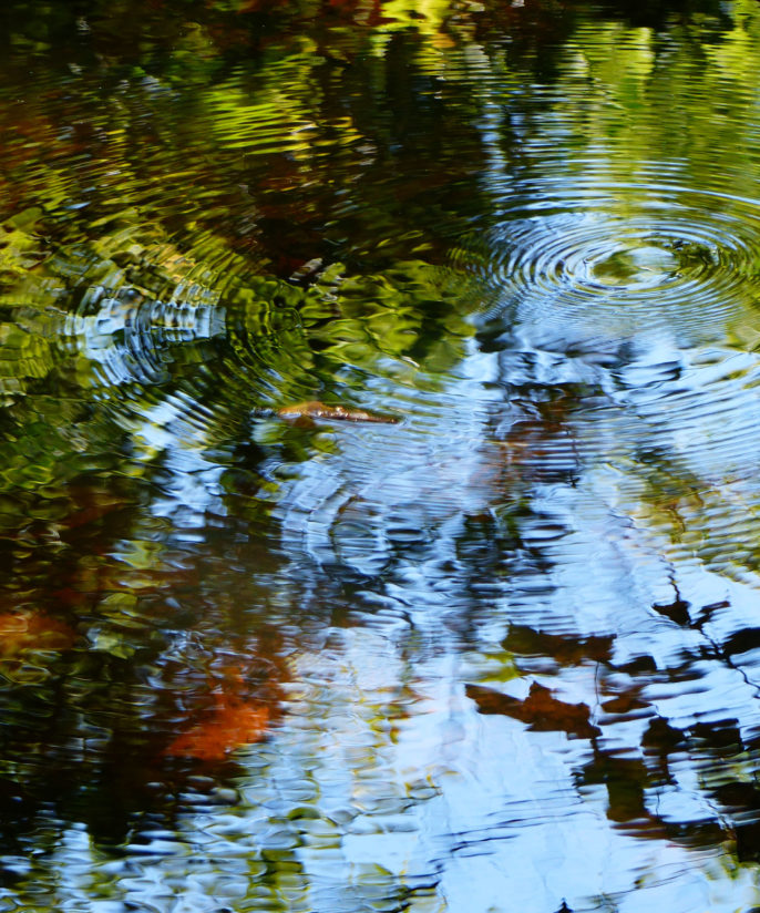 Reflections with Water Ripples (vertical)