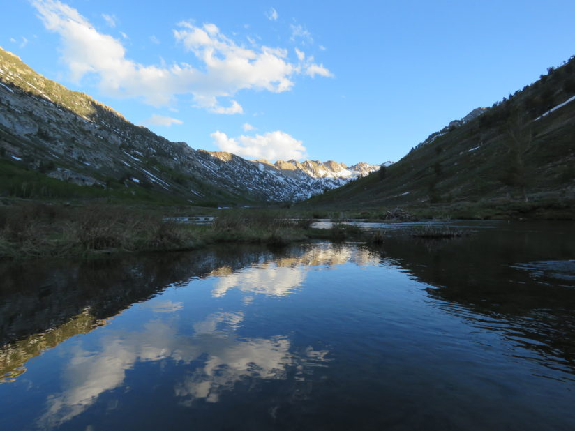 Evening Reflection in Lamoille Canyon