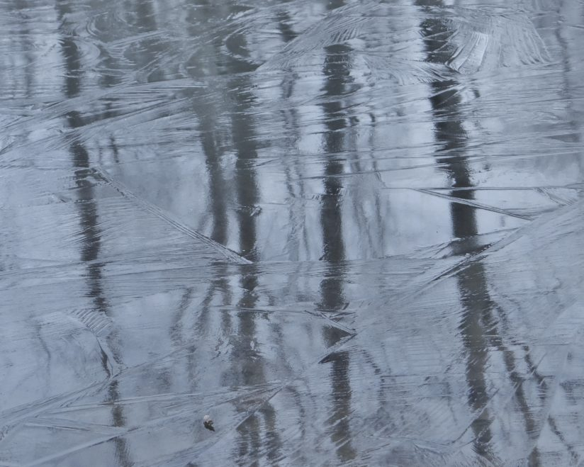 Tree Reflections on Icy Pond