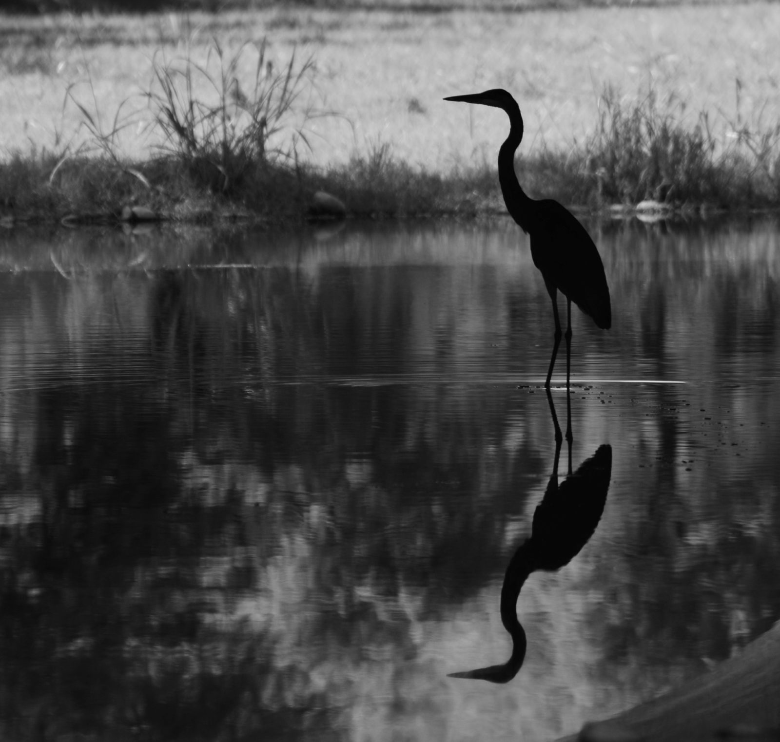 Reflection Black and White