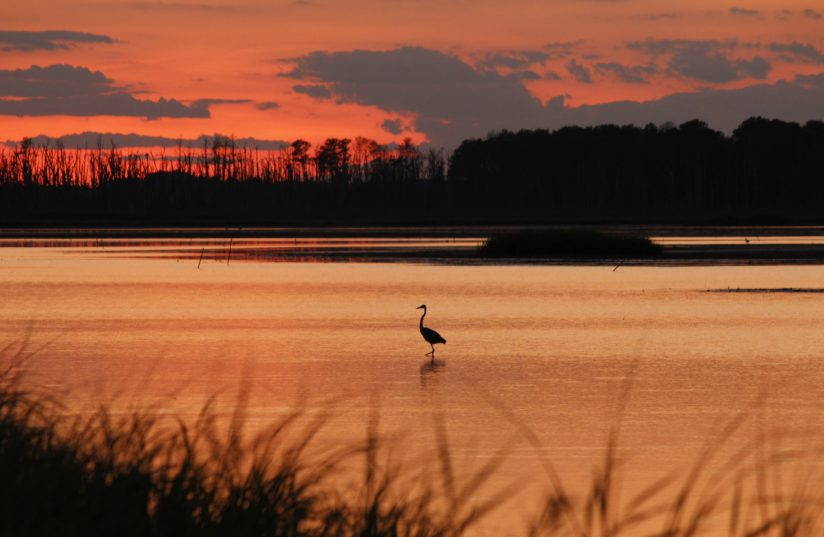 Evening Colors in the Marsh