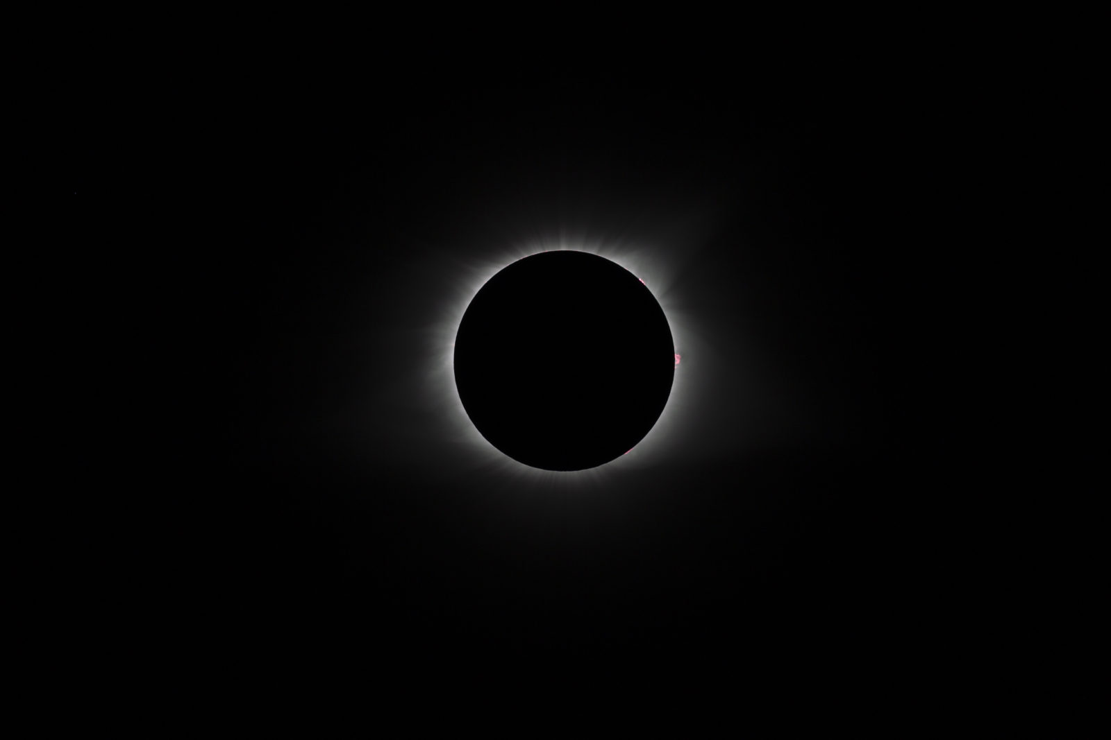 The Great American Eclipse-Prominences