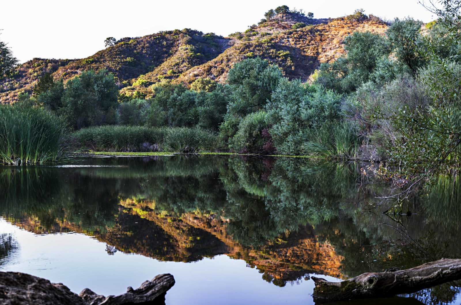 Century Lake Reflection in Malibu Creek State Park