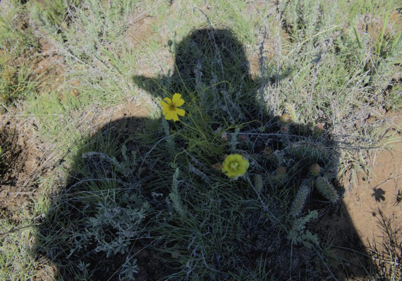 Cactus Flower & Shadow