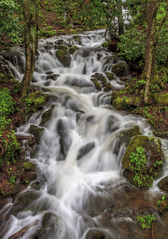 Little Smoky Mountain Stream