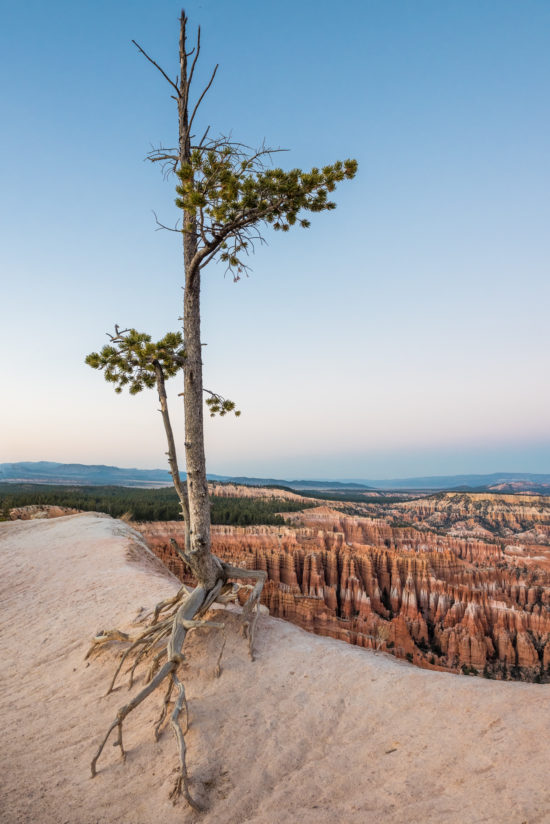 View Of Bryce Canyon