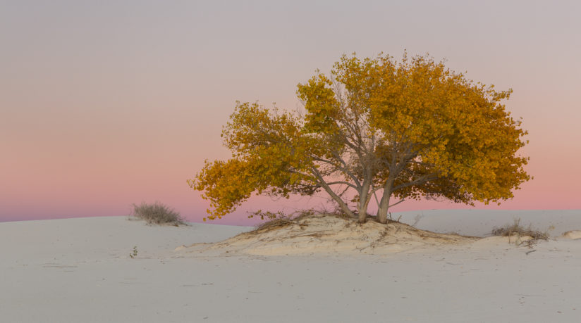 Autumn in the Desert.. White Sands