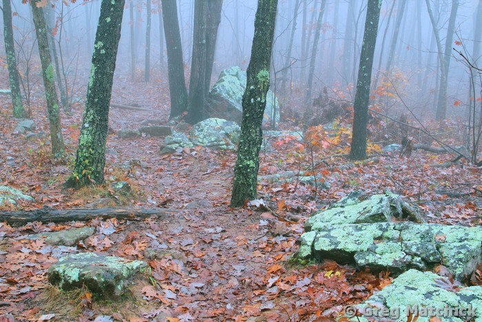 Foggy Morning On the Ozark Trail 1