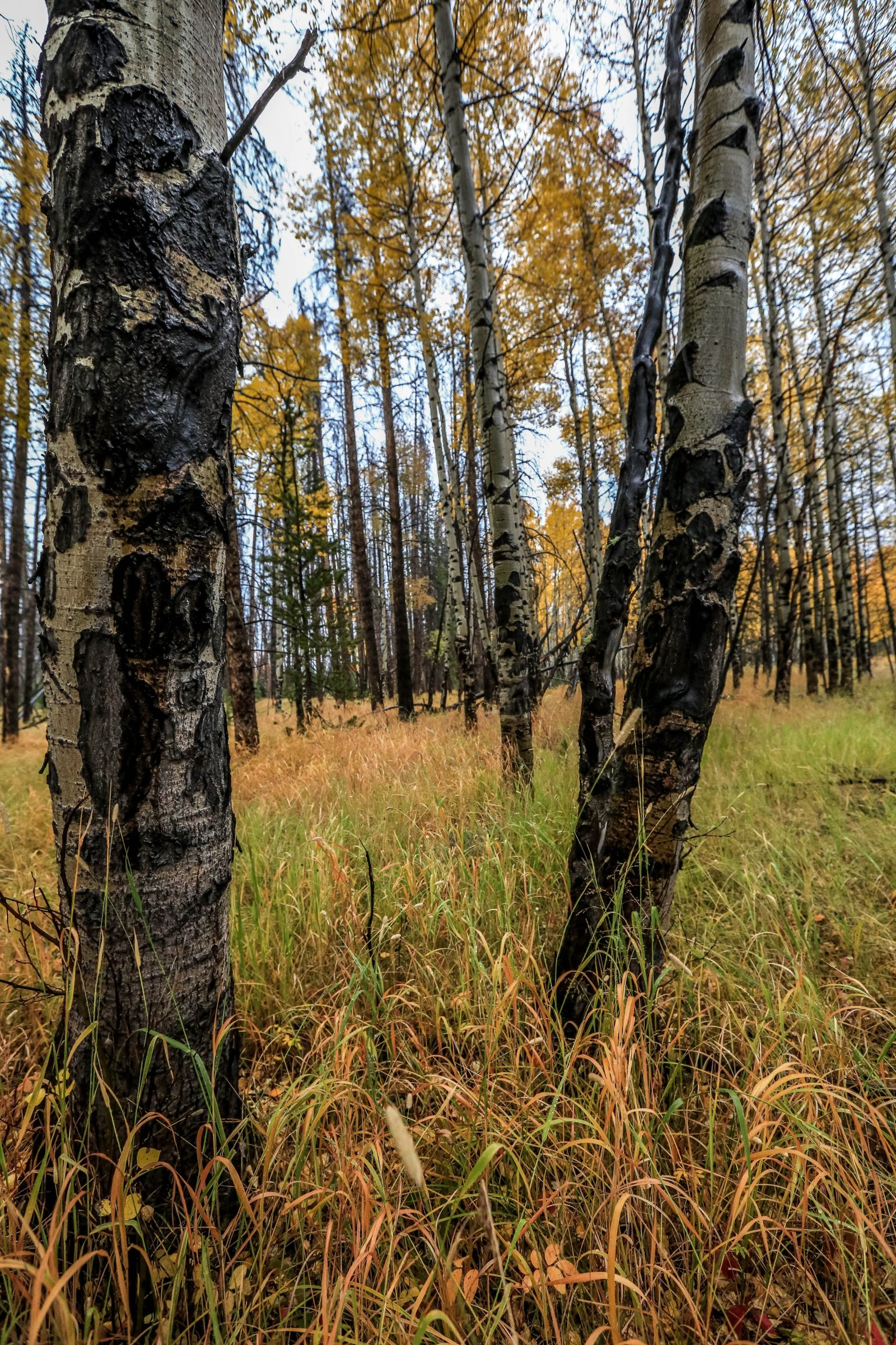 Grand Lake Fall Forest