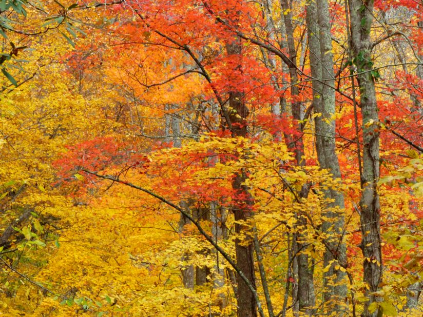 Fall Color Explosion