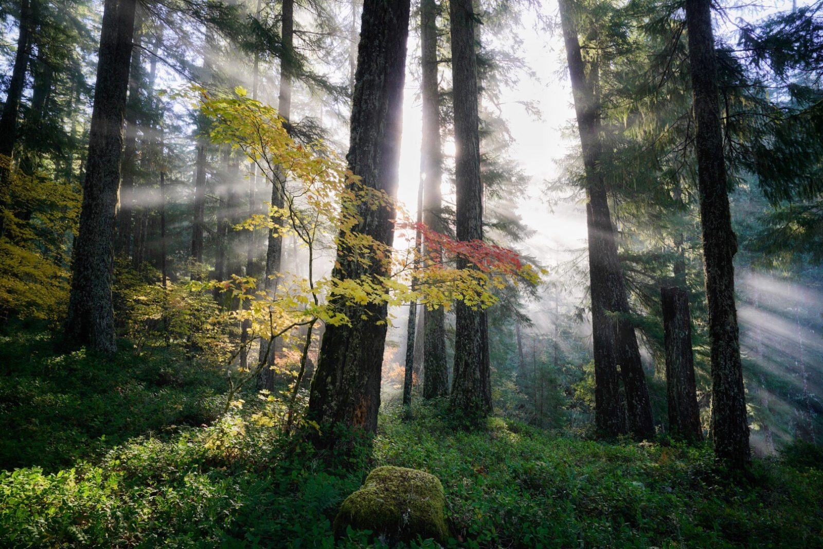 The Sun and the Forest