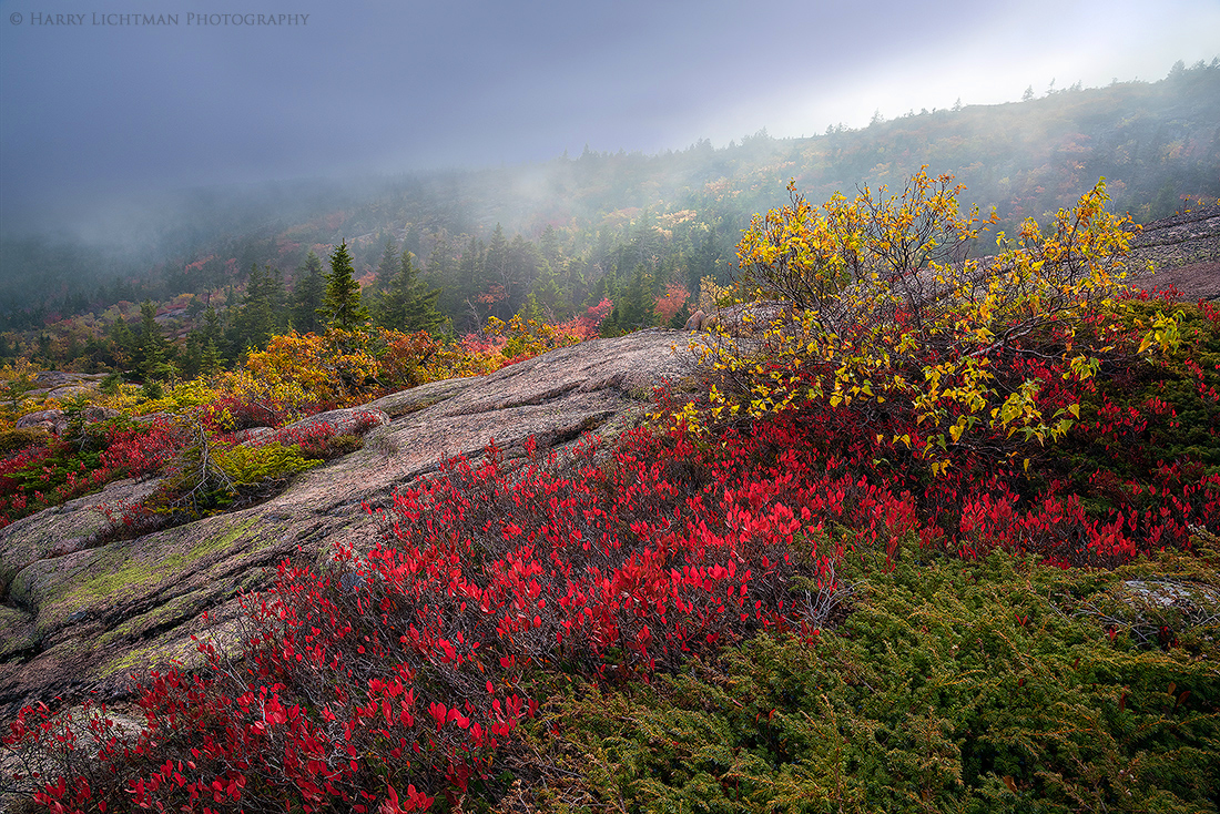 Foliage & Fog – Cadillac Mountain