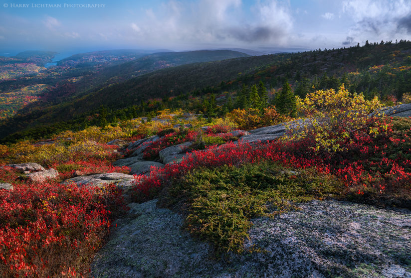 Alpine Colors – Cadillac Mountain
