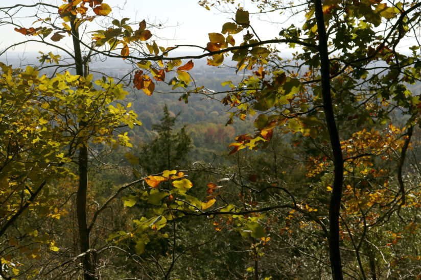 Fall at Kennesaw Mountain