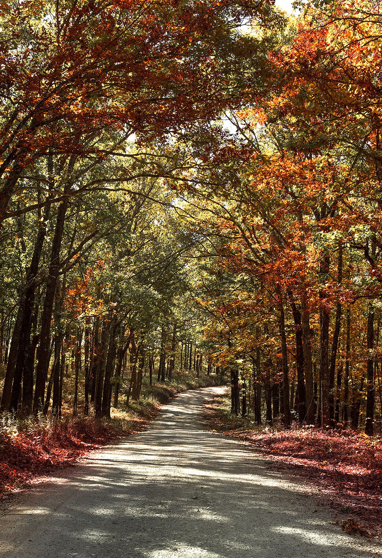 Fall in the Ozarks
