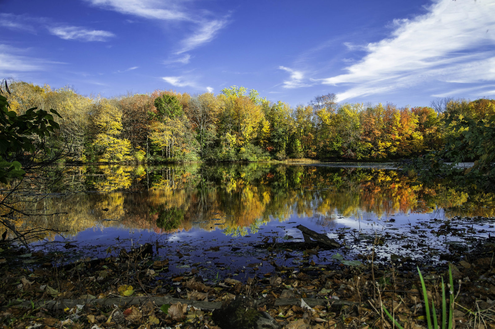 Perry's Mill Pond