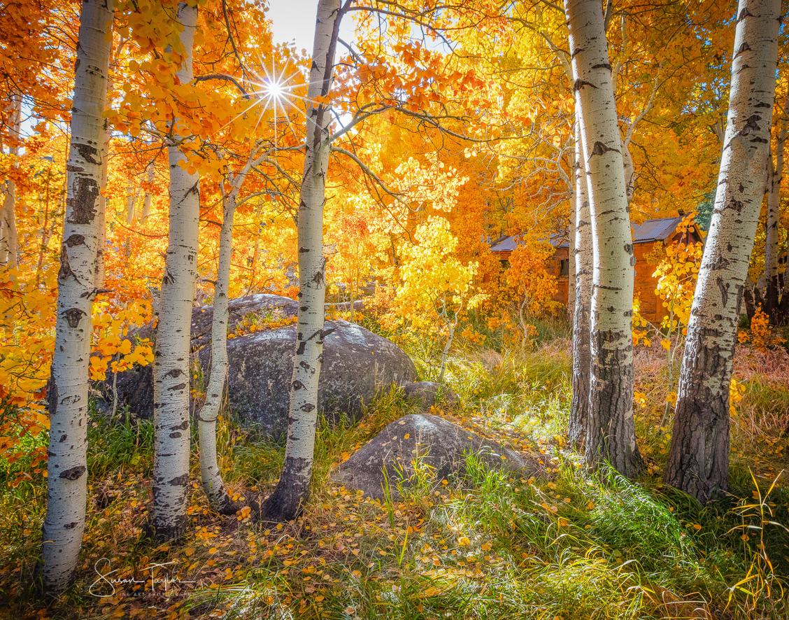 Aspens and Solitude in the Sierra Nevada