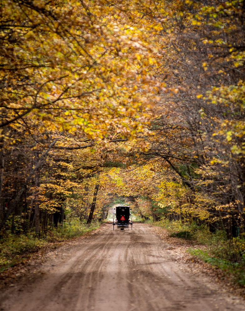Amish in the Tree Tunnel
