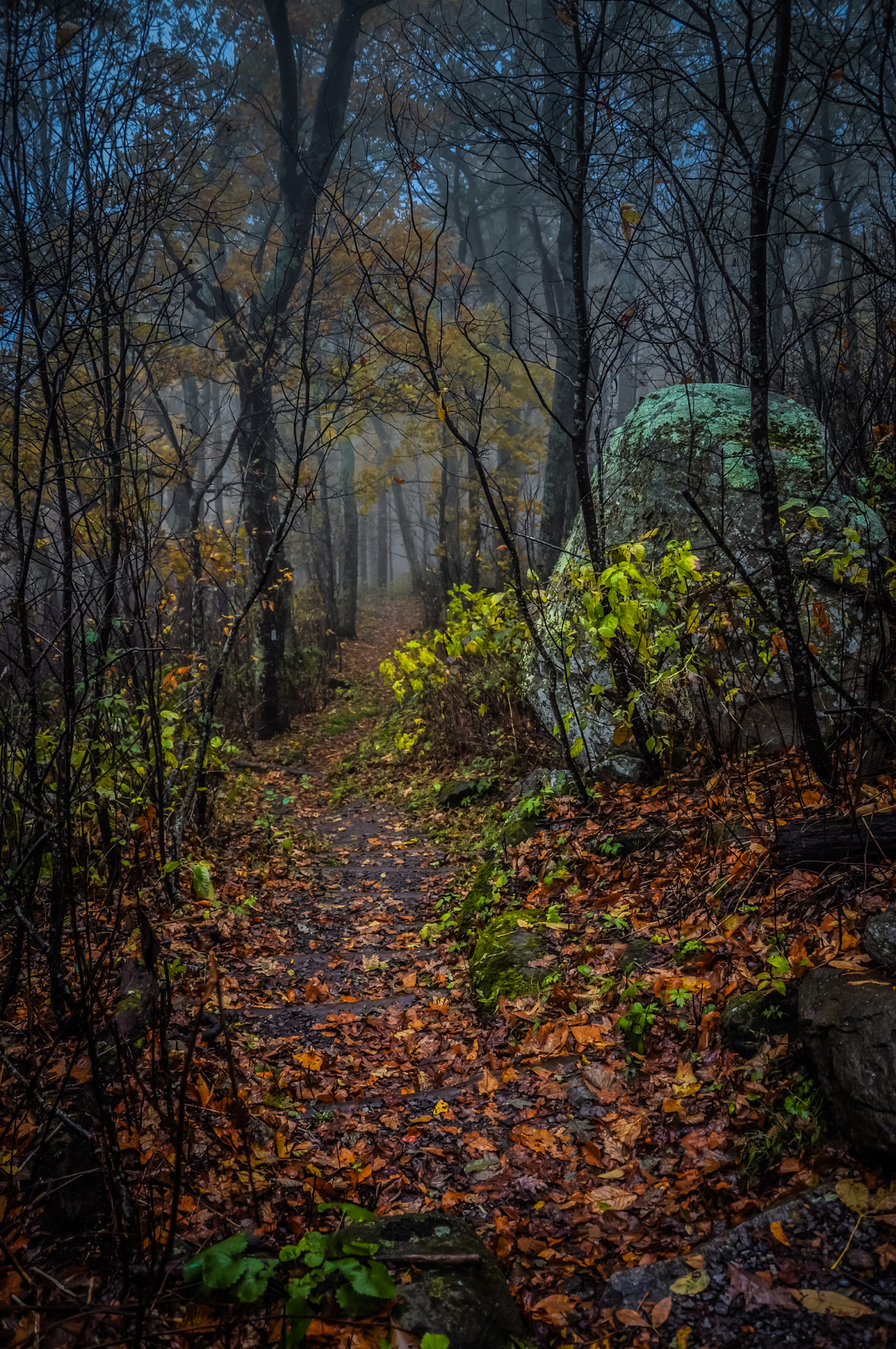 Appalachian Trail by Thunder Ridge
