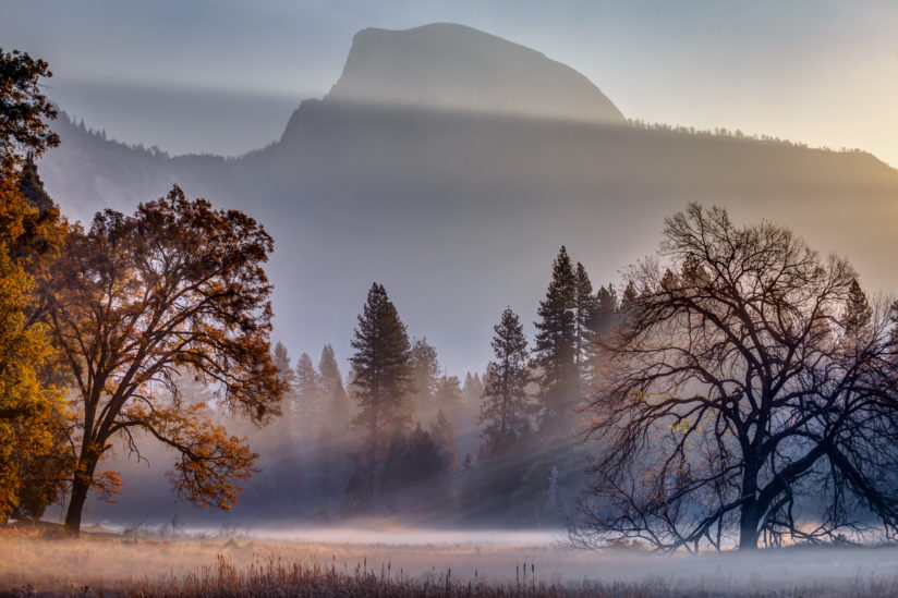 Light Rays in Yosemite Ground Fog