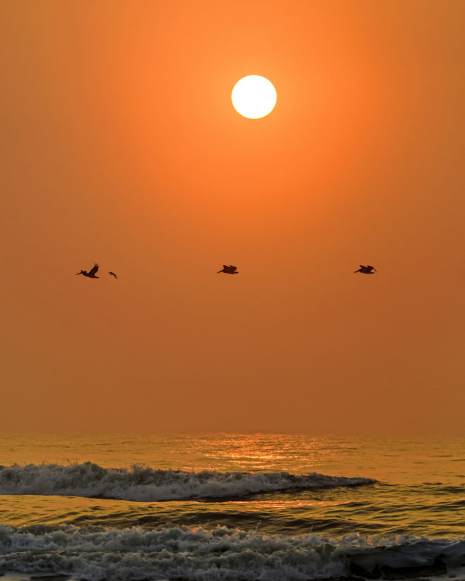 Sunrise Pelicans