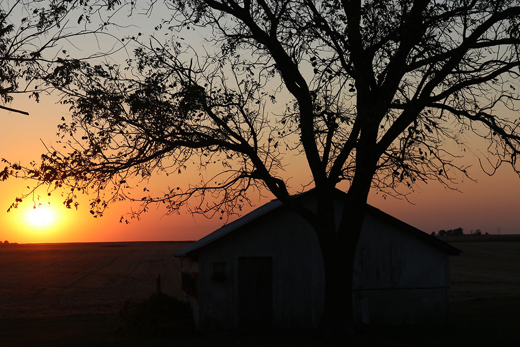 Sunset behind the coop