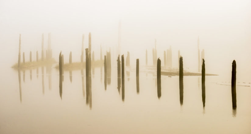 Pilings in the Fog
