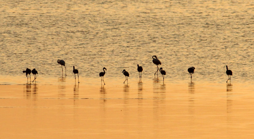 THE FLAMINGOS IN SILHOUETTE