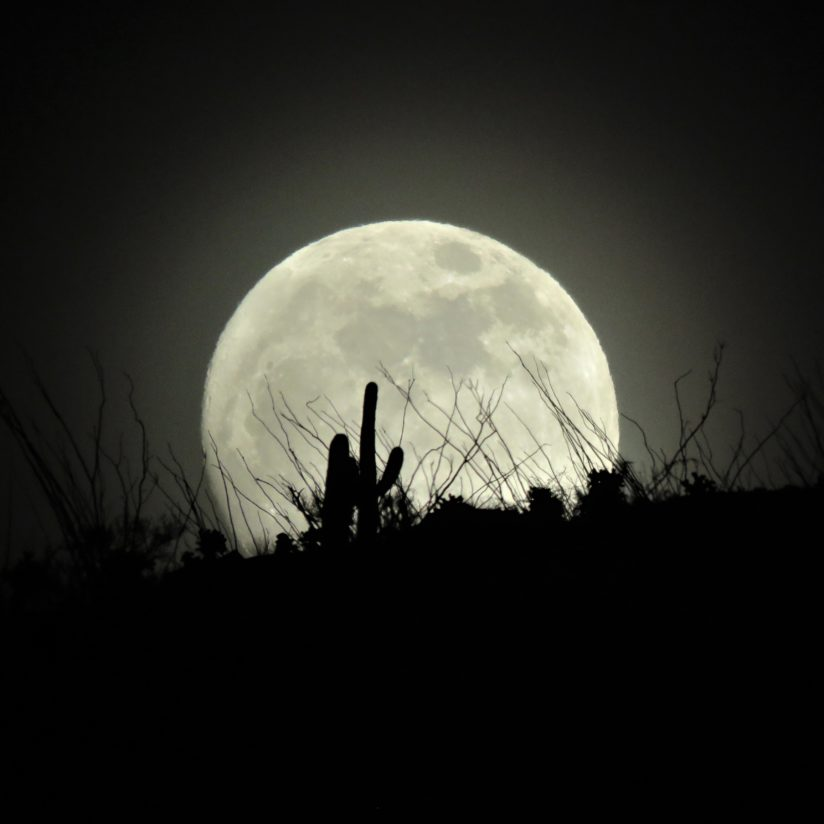 Supermoon Saguaro Silhouette