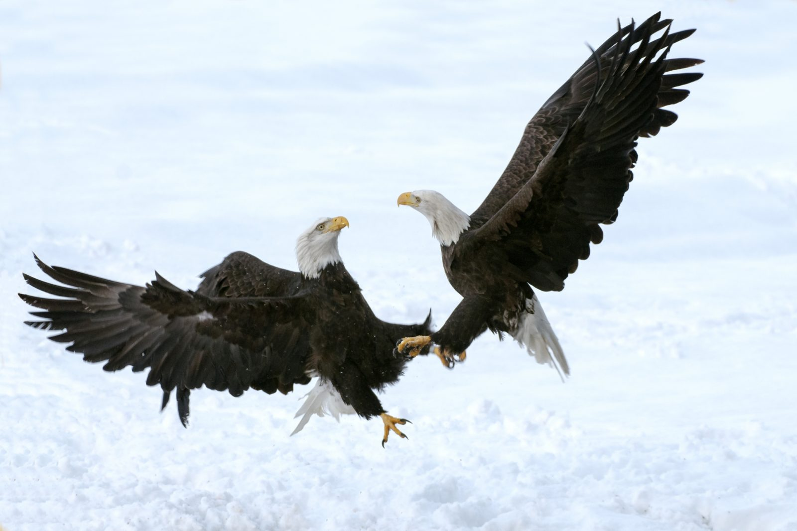 Eagles Battle