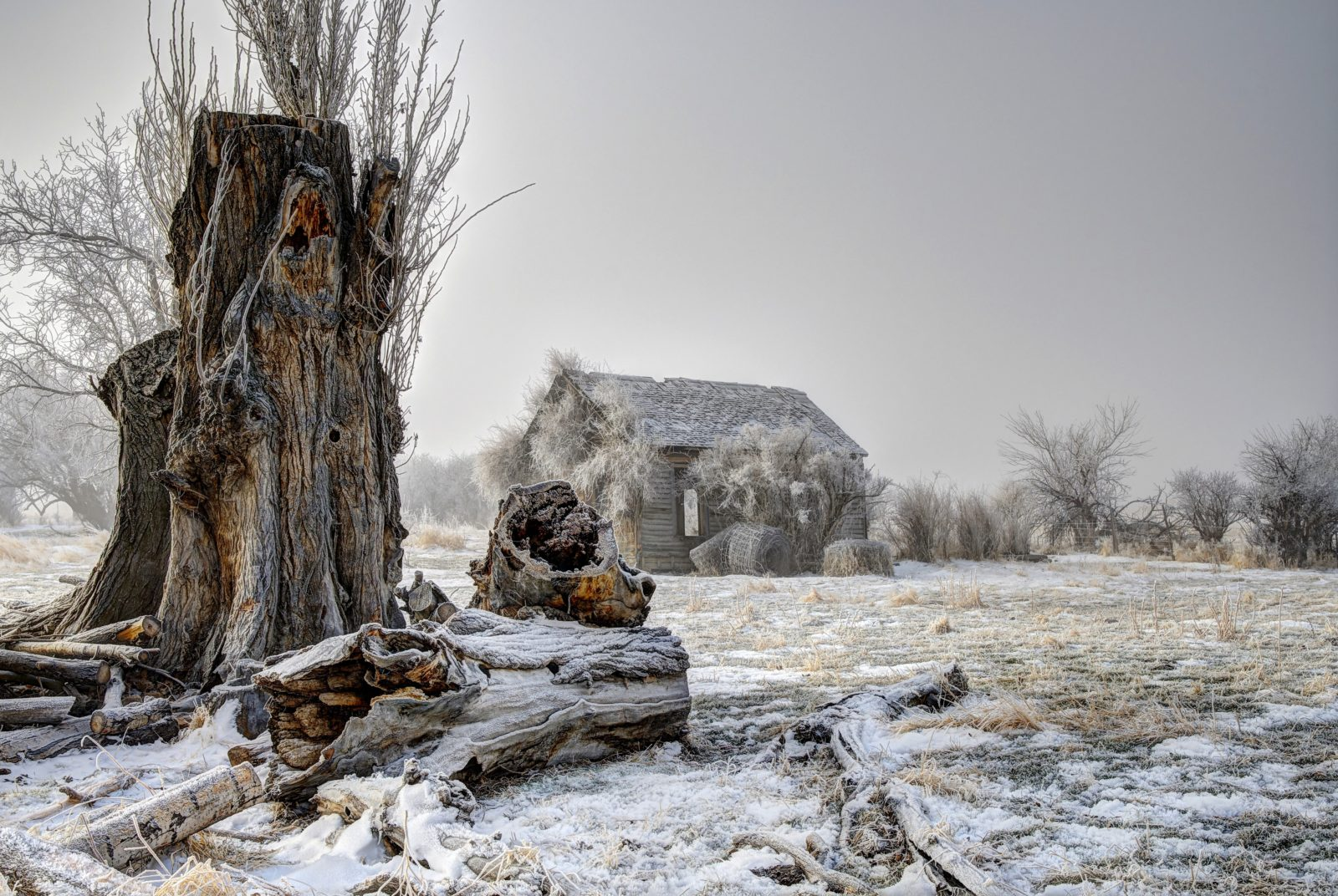 Frosted and Forgotten