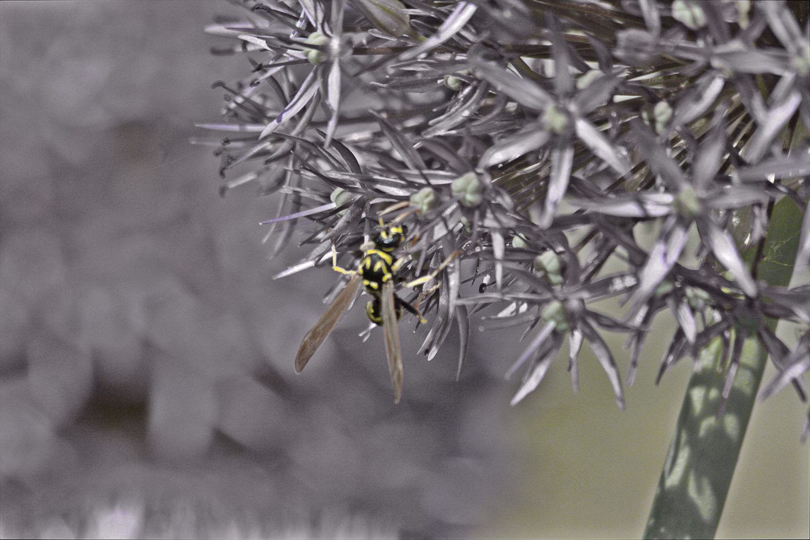 Busy Yellow Jacket