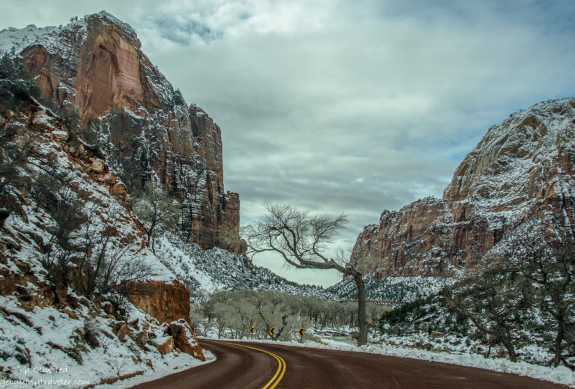 Reaching for snow at Zion