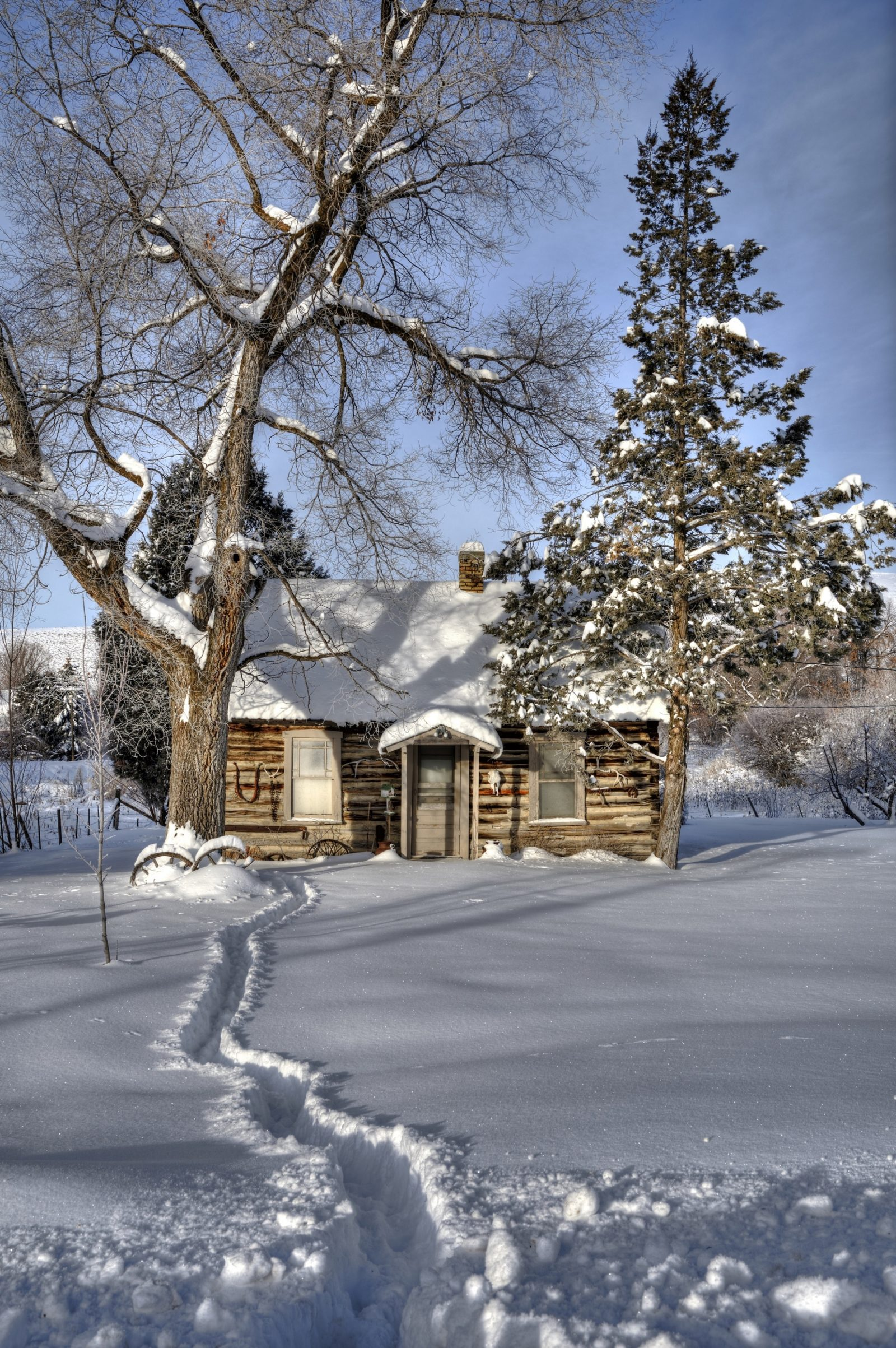 Winter Wonderland Cabin