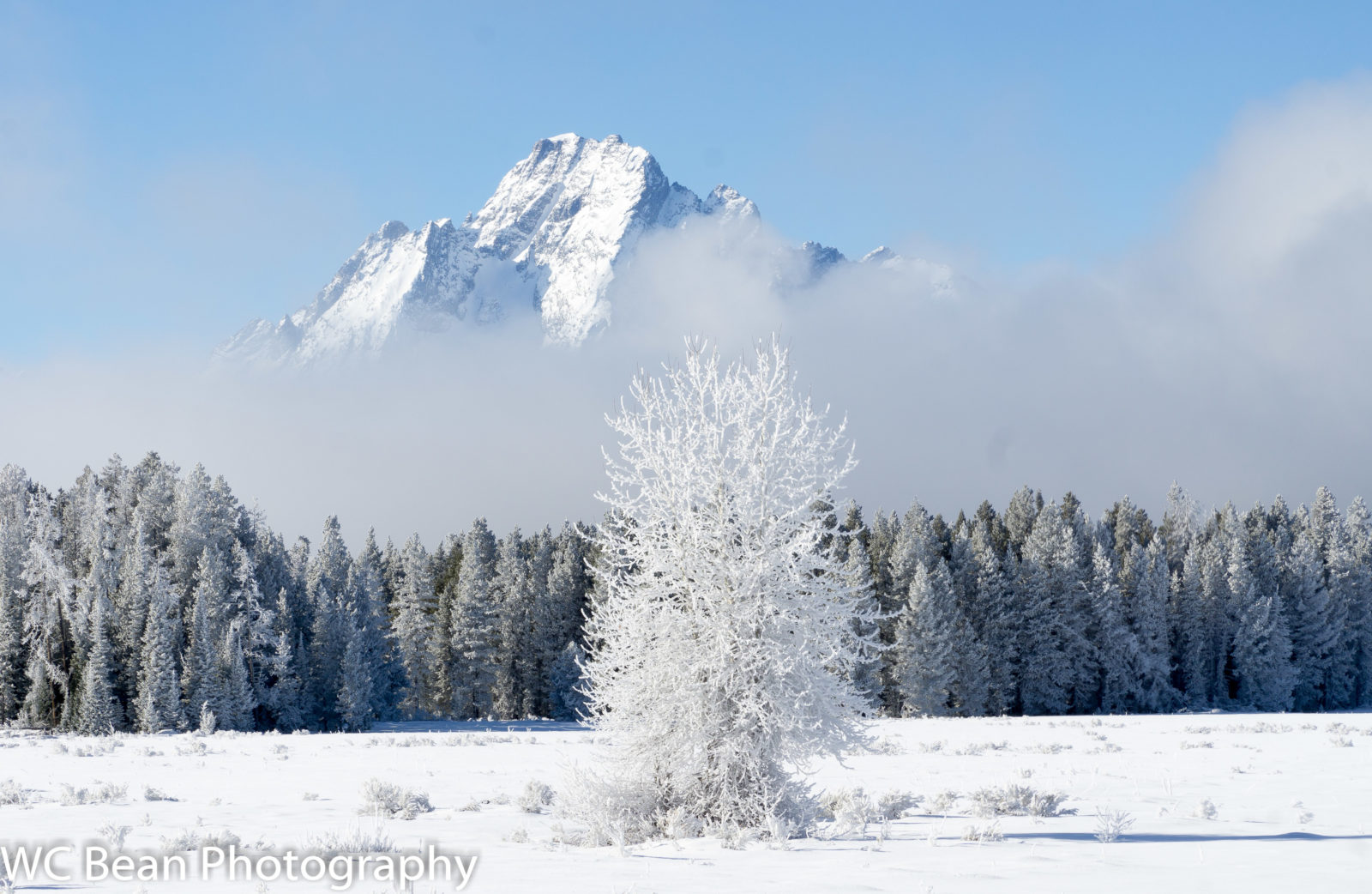 Foggy Morning in the Tetons