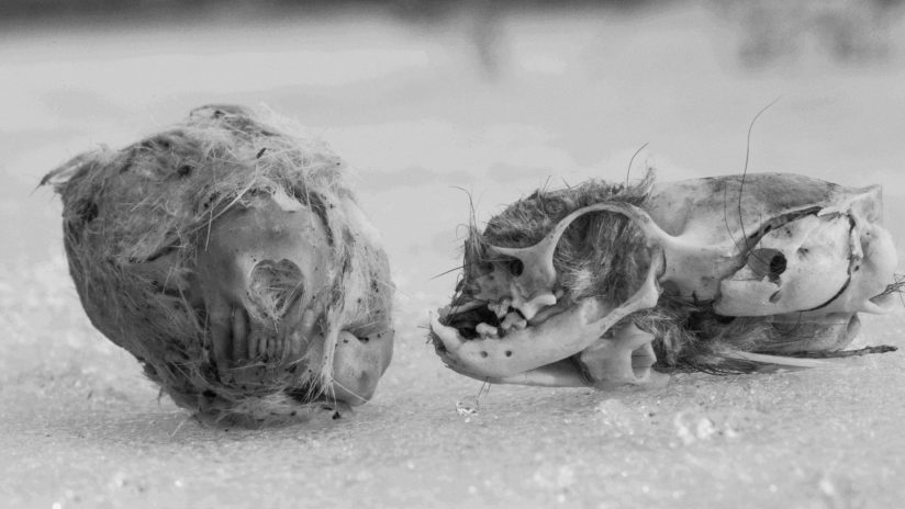Skulls on Winter Ice