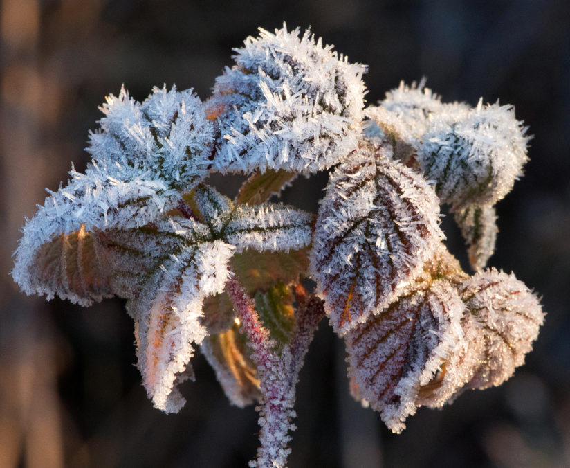 Ice Crystals on Colorful Foliage