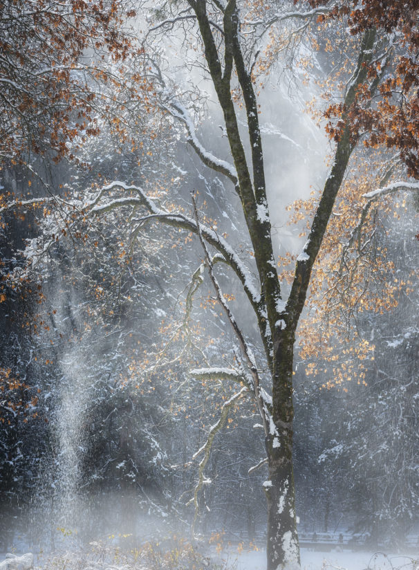 Snow Falling Off, Yosemite