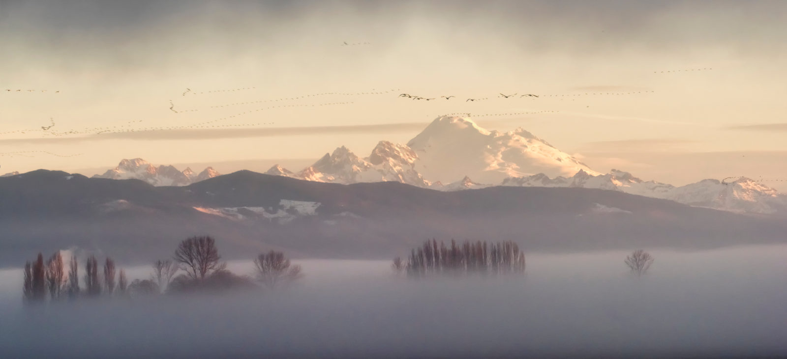 Fogging morning in Skagit Valley, WA