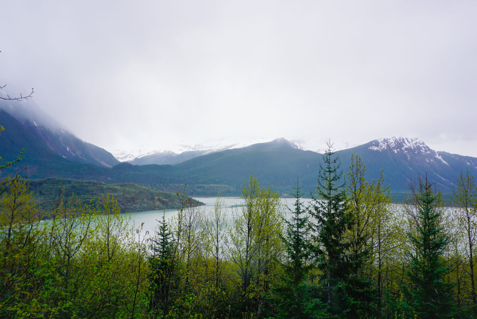 Foggy Mendenhall Lake area