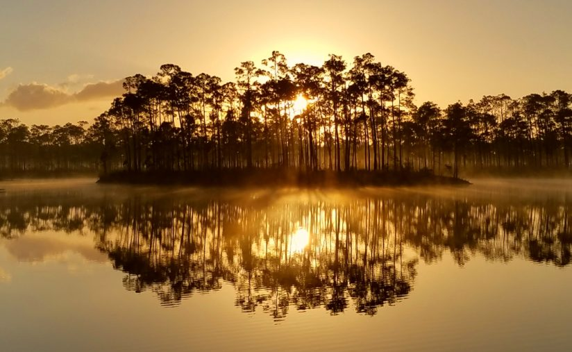 Sunrise Everglades