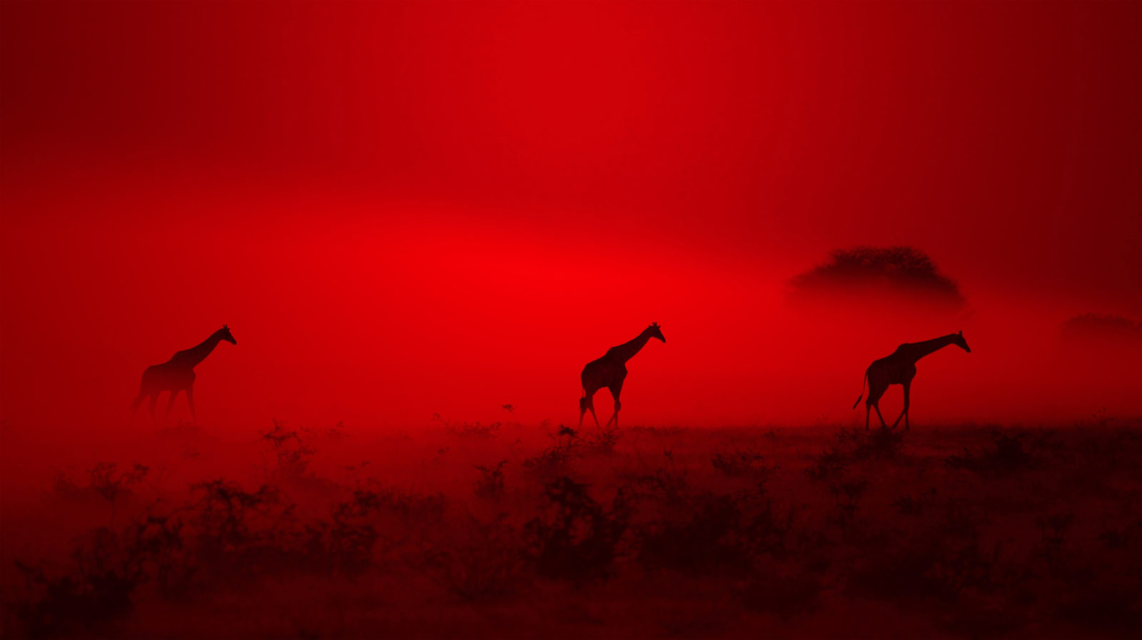 Giraffe Silhouette – Out of Red Dust and Smoke they came