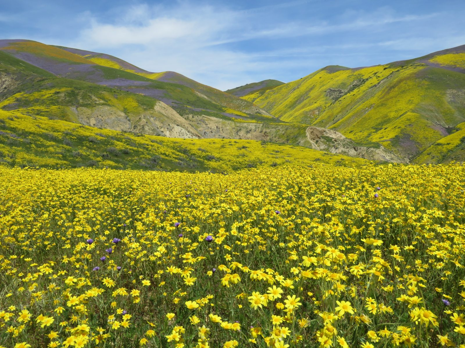 Yellow Fields and Hills