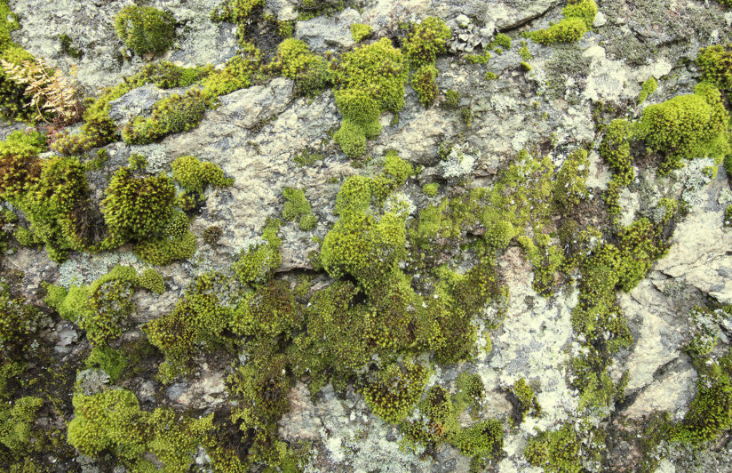 Lichens On The Rock