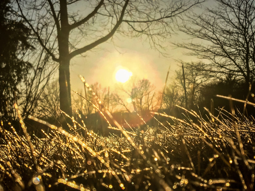 Golden Frozen Sunset…