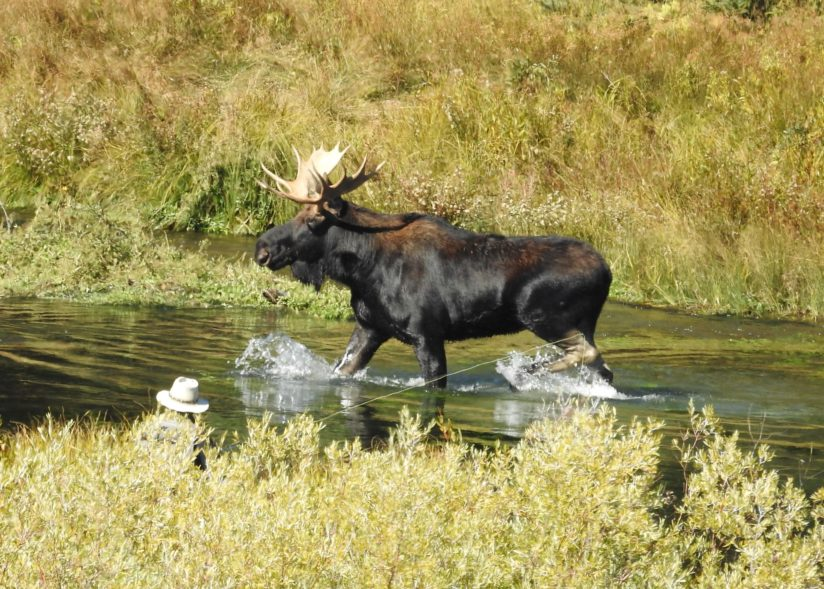 Moose & fisherman